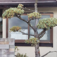 甲府市S様 外壁塗装、屋根塗装のサムネイル